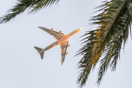 Airplane framed by palm trees. Stock Photo