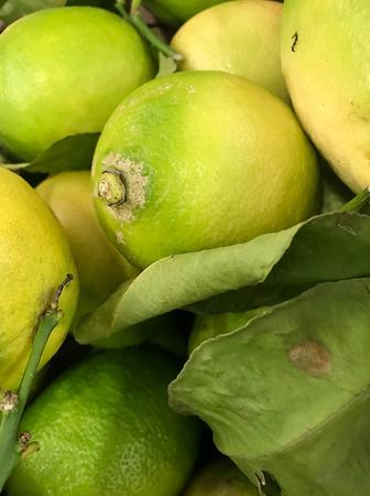 close up: Close up of lemons.