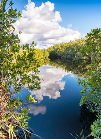 everglades: Florida Everglades colors.
