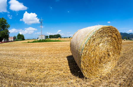 Hay ball in summer season. Stock Photo