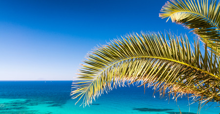 clear waters: Palm branch against stunning crystal clear sea waters, holiday concept.