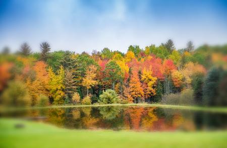 Foliage reflections on a lake.