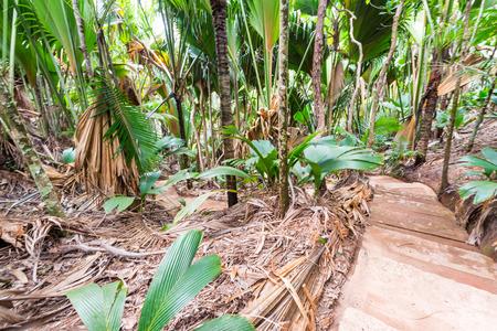 Tropical forest in Valle de Mai, Praslin, Seychelles. Stock Photo