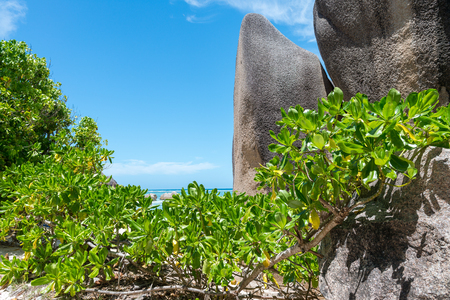 Beautiful rocks on the beach in Anse Source DArgent - La Digue, Seychelles.