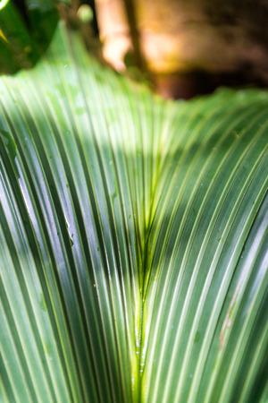 Tropical palm trees in Valle de Mai, Praslin, Seychelles.