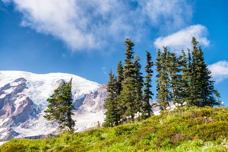 Glacier of Mt Rainier in summer time. Stock Photo