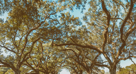 Oak Alley Plantation panoramic view, Louisiana.