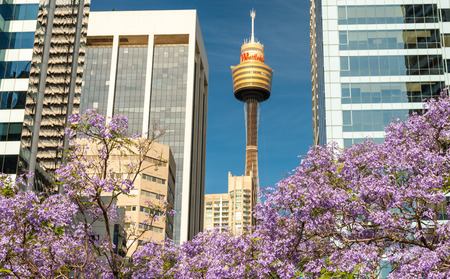 SYDNEY - OCTOBER 2015: Sydney Tower on a beautiful day. The city attracts 10 million people annually.