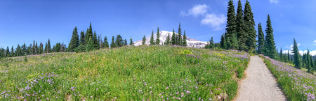 Mount Rainier National Park trail in summer season. Stok Fotoğraf - 95899304