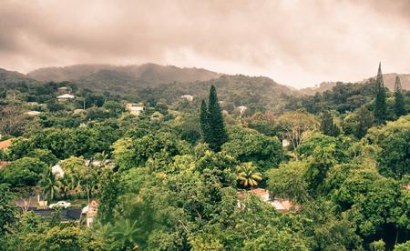 Vegetation and Nature in Roatan, Honduras