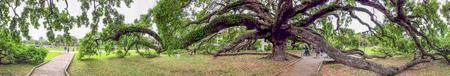 Treaty Oak Park panoramic view, Jacksonville, Florida.