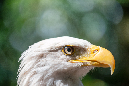 Side view of Eagle.
