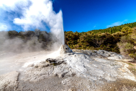 Lady Knox Geyser at the Wai-O-Tapu Thermal Wonderland scenic area, New Zealand. Stock Photo