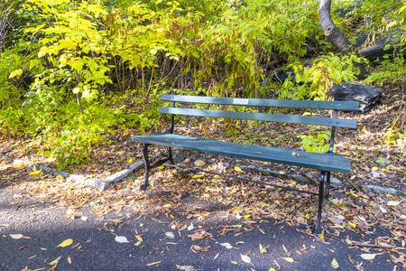Green Bench in Central park. Banque d'images