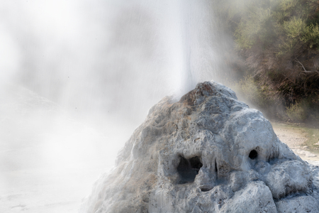 Lady Knox Geyser erupting, Wai-O-Tapu, New Zealand.