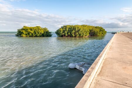 Road and mangroves of Key West, Florida. Stok Fotoğraf