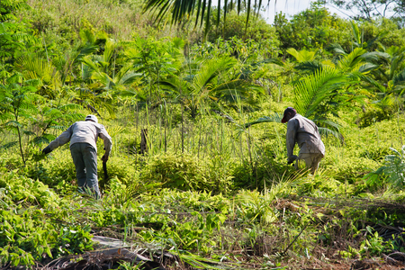 Workers in a plantation under sunny sky.