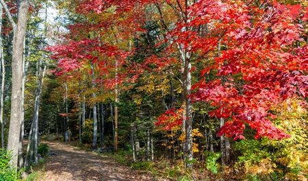 Landscape of New England in Foliage Season, October in USA. Trees and trail. 免版税图像