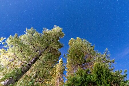 Pine trees against a sky full of stars. Mountain holiday in summer.