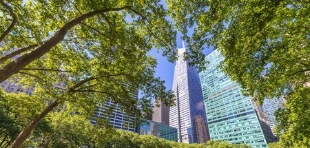 Skyscrapers of Manhattan framed by Bryant Park trees, New York City.