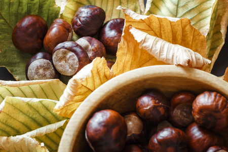 Chestnuts on a colorful autumn leaves, on a dark background