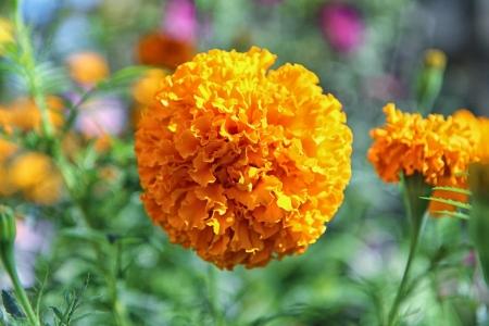 burgeon: Orange burgeon