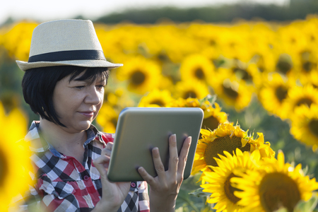 Female farmer, an agronomist by profession, is in the field with sunflowers. Examines the quality of sunflower  and uses tablets to record quality and yield estimates.