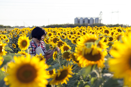 Woman farmer, an agronomist by profession, is in the field with sunflowers. Examines the quality of sunflower. Uses a tablet to record quality and yield estimates