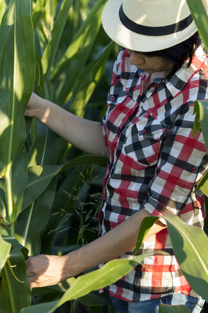 Close up woman farmer, the agronomist examines the quality of corn
