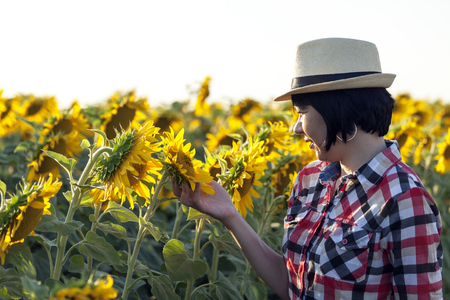Woman farmer with a hat, an agronomist by profession, is in the field with sunflowers. Examines the quality of sunflower Imagens - 81873346