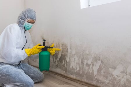 Female worker of cleaning service removes mold from wall using spray bottle with mold remediation chemicals, mold removal products