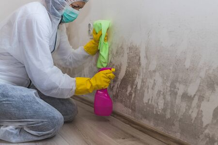 Close up of a female worker of cleaning service removes mold from wall using spray bottle with mold remediation chemicals, mold removal products.
