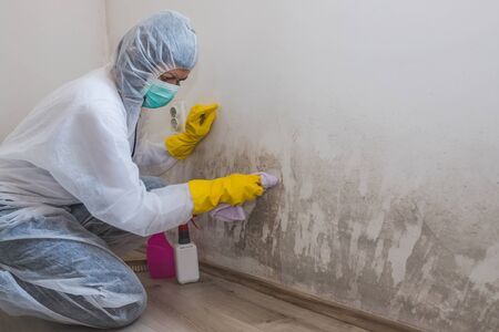 Female worker of cleaning service removes mold from wall using spray bottle with mold remediation chemicals, mold removal products Foto de archivo
