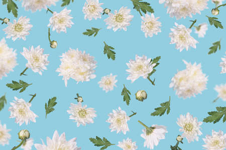 Beautiful flying white flowers and leaves at trendy blue background, creative floral layout. Birthday, Minimal concept of nature, Mother's, Valentines, Women's, Wedding Day. Standard-Bild