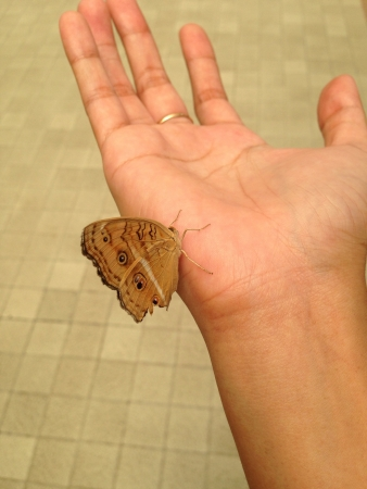 fondling: This pretty butterfly is making friends with me