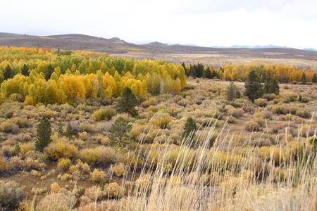 Autumn Landscape  Stock Photo - 8485716