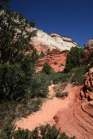 Red and White mountains in Zion National Park  photo