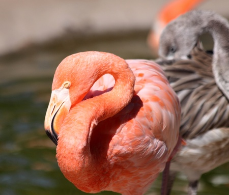 Pink Flamingos  Imagens
