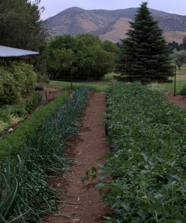 Vegetable Garden photo
