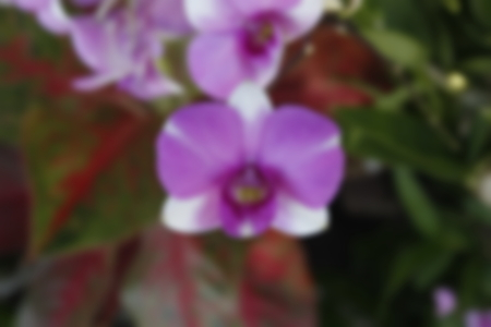 tropical shrub: abstract blur focus of orchid flower