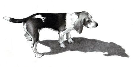 Pencil Drawing of a Beagle Dog