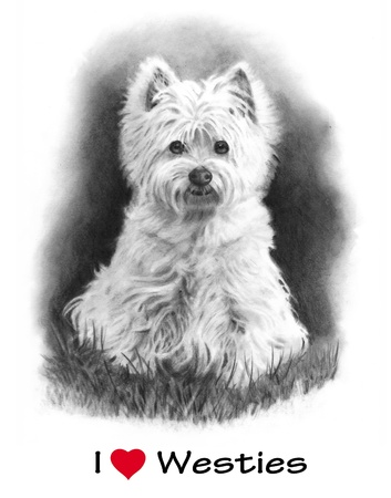 cute westie: Pencil Drawing of West Highland Terrier Dog