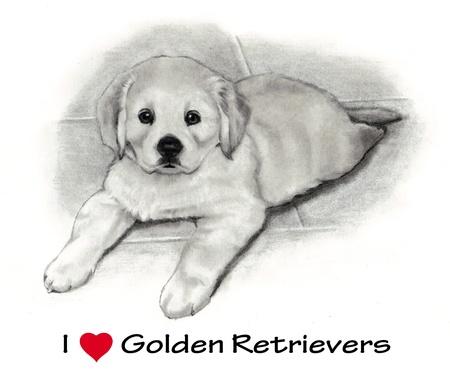 Cachorro Golden Retriever: Dibujo a mano alzada Lápiz Foto de archivo - 10880278