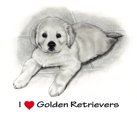 golden: Golden Retriever Puppy: Freehand Pencil Drawing Stock Photo