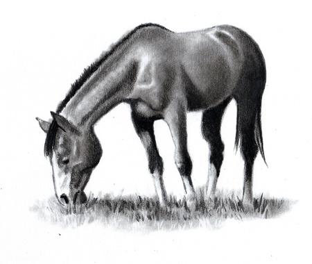 grafite: Disegno a matita di cavallo al pascolo