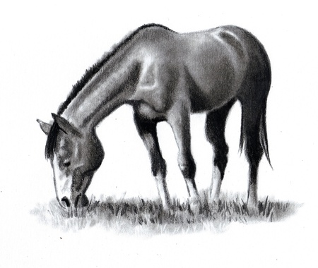 Pencil Drawing of Horse Grazing Imagens