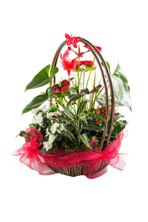 Colorful flower bouquet arrangement isolated on white. photo