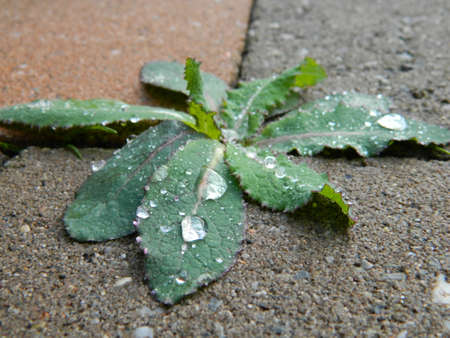 dewdrops: Dewdrops on weed