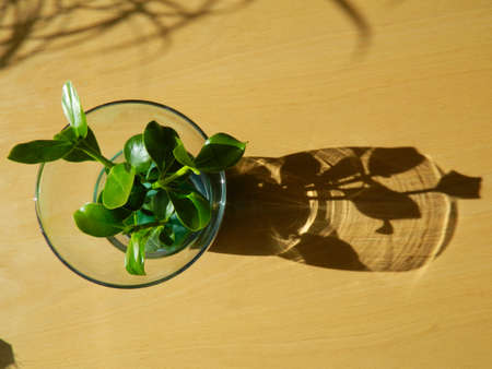 shadow: Glass Shadow Stock Photo