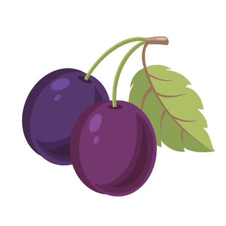 plum: Plum. Simple illustration of plum
